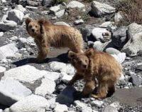 Twenty-five years of conserving biodiversity in the Hindu Kush-Himalaya regions