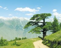 Why every nature lover should trek across the majestic Chitral Gol National Park